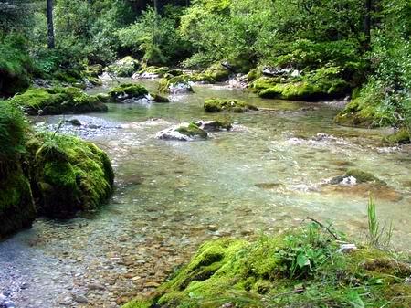 blut muss fließen stream