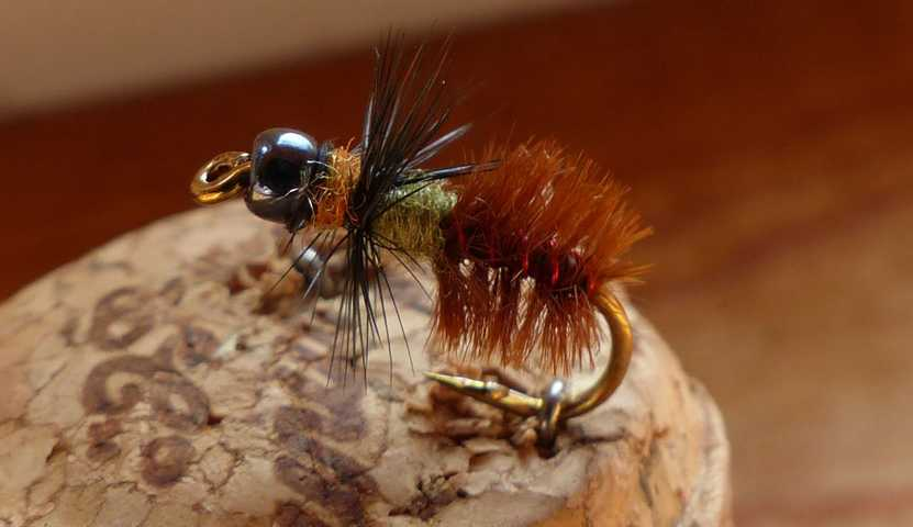 Cased_Caddis 0141.JPG