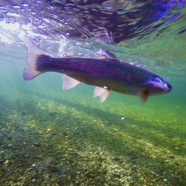 Download Lie By Nf: Herbstfischen • Fliegenfischer