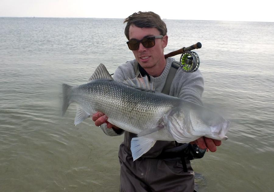 Fisch viel Fisch Fischprofil